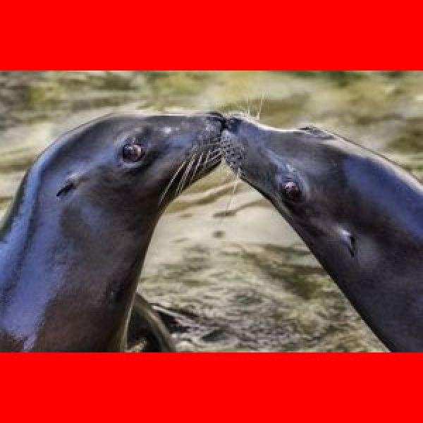 Valentines-dinner-at-the-aquarium-2016